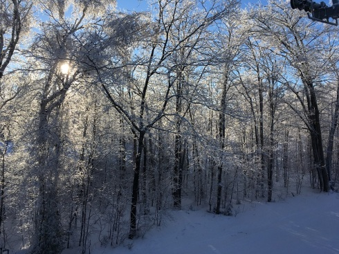 Iced trees on the ski hill